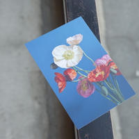 OF PLANTS // POST CARD - poppy