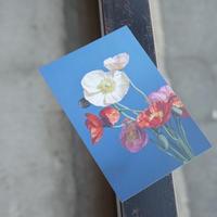 OF PLANTS // POST CARD - poppy