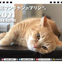 【予約販売】 短足マンチカンのプリン 2021年 卓上カレンダー TC21077