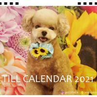 【予約販売】 トイプードル ティルtill 2021年 卓上カレンダー TC21083