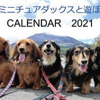 【予約販売】 ミニチュアダックスと遊ぼ 2021年 壁掛けカレンダー KK21001