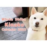 【予約販売】 白柴 きなこ 2022年 壁掛け カレンダー KK22140