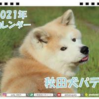 【予約販売】 秋田犬 パティ 2021年 卓上カレンダー TC21132