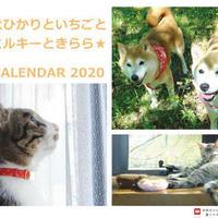 【送料無料】2020年『柴犬ひかりといちごと猫ミルキーときらら★』卓上カレンダー