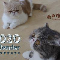 【送料無料】2020年『寿&福丸』壁掛けカレンダー
