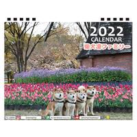 【予約販売】 柴犬 LINNファミリー 2022年 卓上 カレンダー TC22084