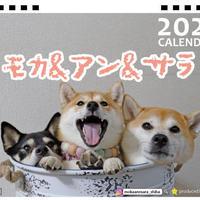 【予約販売】 柴犬 モカ&アン&サラ 2021年 卓上カレンダー TC21082