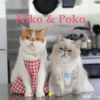 【予約販売】 猫のniko&poko 2021年 壁掛けカレンダー KK21005