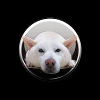 白柴きなこ 限定版  缶バッチ2セット 東急ハンズ池袋店販売記念品