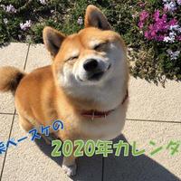 【送料無料】2020年『豆柴ペースケ』壁掛けカレンダー