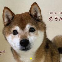 【予約販売】 柴犬めろん 2021年 壁掛けカレンダー KK21053