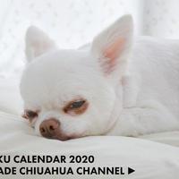 【送料無料】2020年『あくまでチワワ』壁掛けカレンダー