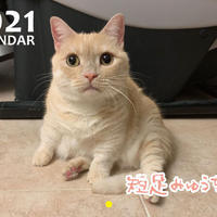 【予約販売】 短足みゅうちゃん  2021年 壁掛けカレンダー KK21130
