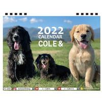 【予約販売】 ゴールデンレトリバー こーる君たち 2022年 卓上 カレンダー TC22127
