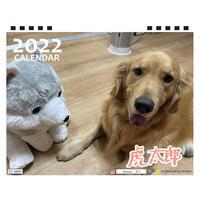 【予約販売】 ゴールデンレトリバー 虎太郎 2022年 卓上 カレンダー TC22053