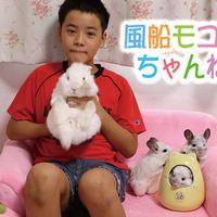 【送料無料】2020年『風船モコちゃんねる』壁掛けカレンダー