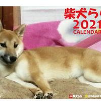 【予約販売】 柴犬 らら 2021年 卓上カレンダー TC21093