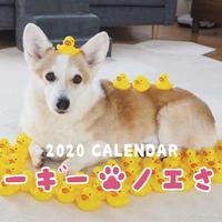 【送料無料】2020年『コーギーノエさん』壁掛けカレンダー