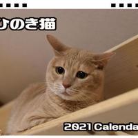 【予約販売】 ひのき猫 卓上カレンダー全面 TC21057