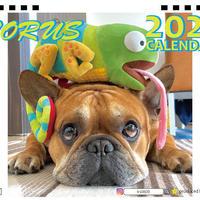 【予約販売】  フレンチブルドッグ torus トーラス 2021年 卓上カレンダー TC21010