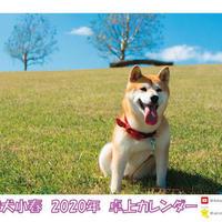【送料無料】2020年『柴犬小春』卓上カレンダー