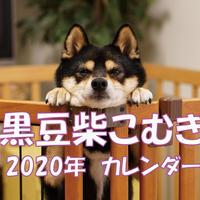 【送料無料】2020年『黒豆柴こむぎ』壁掛けカレンダー