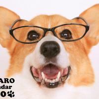 【送料無料】2020年『KOTARO』壁掛けカレンダー