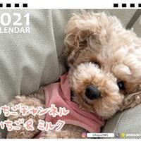 【予約販売】 トイプードル いちご&ミルク 2021年 卓上カレンダー TC21126