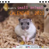 【予約販売】 ハムスター asahi 2021年 卓上カレンダー TC21112