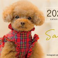 【送料無料】2020年『sano』壁掛けカレンダー