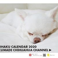【送料無料】2020年『あくまでチワワ』卓上カレンダー