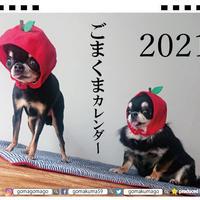 【予約販売】 極小チワワのごまくま 2021年 卓上カレンダー TC21097