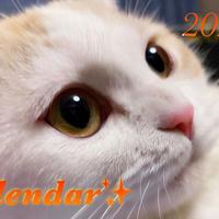【送料無料】2020年『minny』壁掛けカレンダー