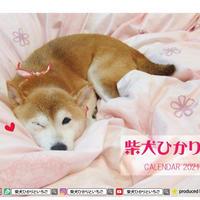 【予約販売】 柴犬ひかり 2021年 卓上カレンダー TC21055