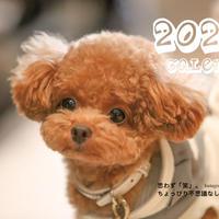 【送料無料】2020年『しらす先輩』壁掛けカレンダー