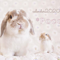 【送料無料】2020年『うさぎのポコたん』壁掛けカレンダー
