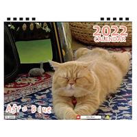 【予約販売】 猫のアフロブルー afroblue 2022年 卓上 カレンダー TC22149