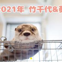 【予約販売】 カワウソ 竹千代 2021年 壁掛けカレンダー KK21043
