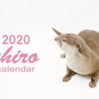 【送料無料】2020年『カワウソ チロ』壁掛けカレンダー