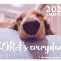 【予約販売】 ミニチュアダックスフンド SORA 2021年 卓上カレンダー TC21086