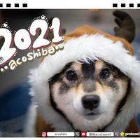 【予約販売】 柴犬 acoshiba 2021年 卓上カレンダー TC21067