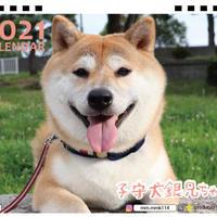 【予約販売】 柴犬 子守犬銀兄ちゃん 2021年 卓上カレンダー TC21114