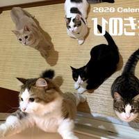 【送料無料】2020年『ひのき猫』壁掛けカレンダー