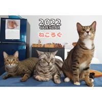 【予約販売】 アメリカンショートヘア猫 ねころぐ 2022年 壁掛け カレンダー KK22155