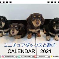【予約販売】 ミニチュアダックスと遊ぼ 子犬 2021年 卓上カレンダー半面 TC21004