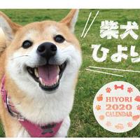 【送料無料】2020年『柴犬ひより』卓上カレンダー