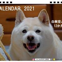 【予約販売】 白柴 空 kuu 2021年 卓上カレンダー TC21098