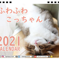 【予約販売】 猫のふわふわこっちゃん 2021年 卓上カレンダー TC21047