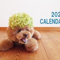 【送料無料】2020年『トイプードルてん』壁掛けカレンダー