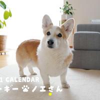 【予約販売】 コーギー ノエさん 2021年 壁掛けカレンダー KK21062
